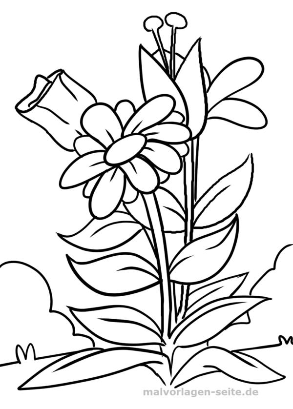 Malvorlage Blume Pflanzen Kostenlose Ausmalbilder