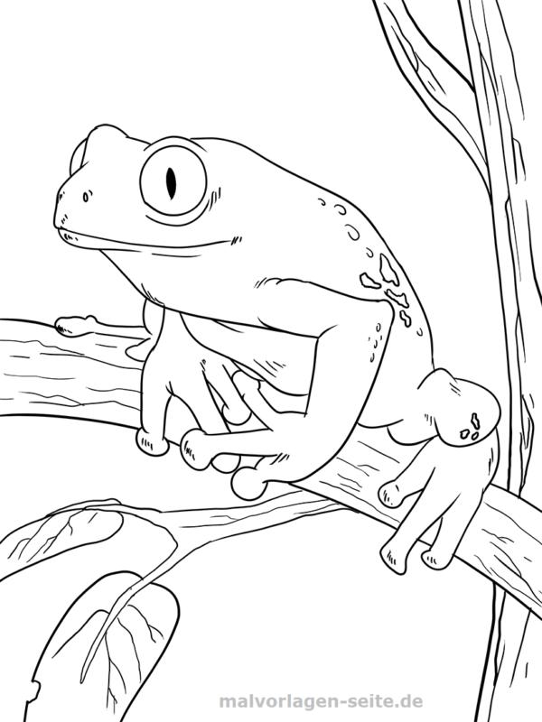 malvorlage frosch  tiere  kostenlose ausmalbilder