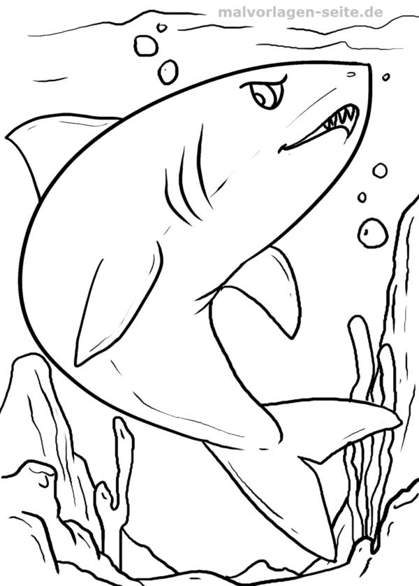 Ausmalbilder für Kinder – Hai Malvorlage / Ausmalbild Hai