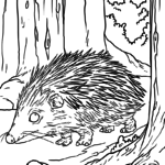 Coloring page Hedgehog | animals