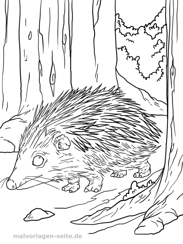 Coloring page hedgehog
