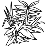 Coloring page plants