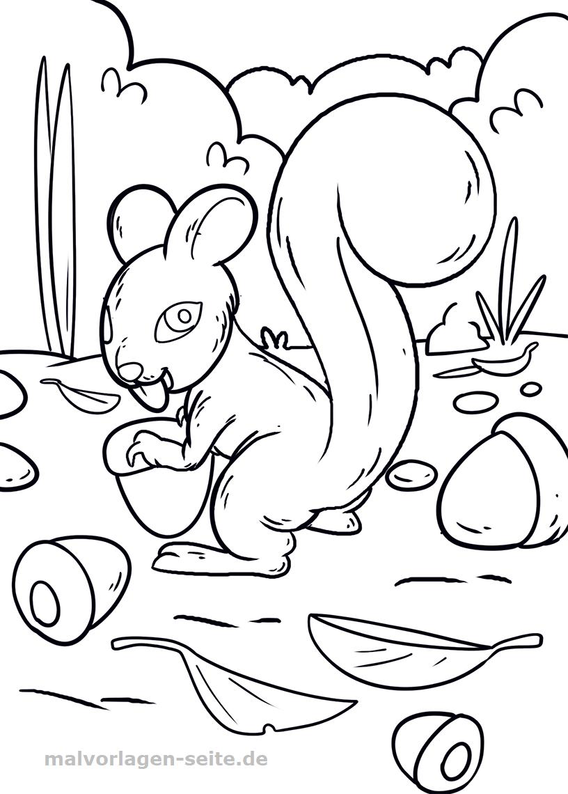 Malvorlage Eichhörnchen Gratis Malvorlagen Zum Download