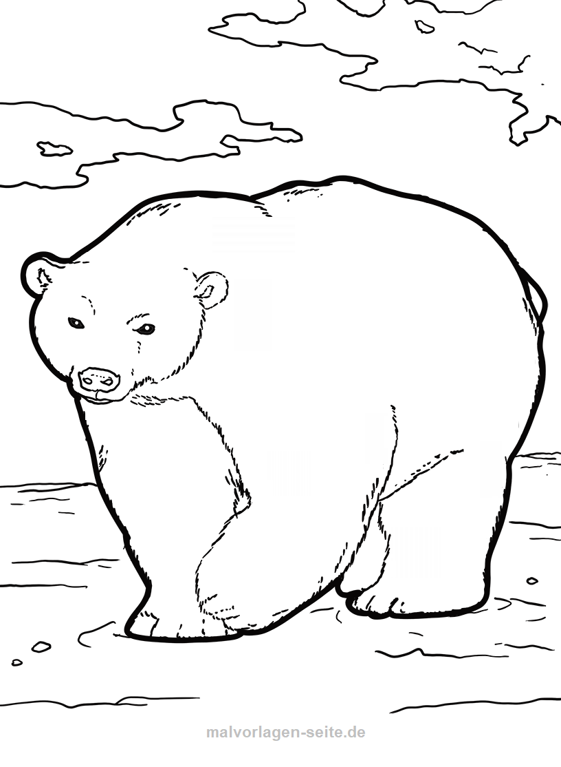 Malvorlage Eisbär Tiere