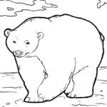 Malvorlage Eisbär | Tiere