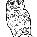 Owls Coloring Pages | Birds