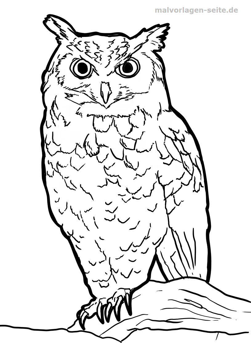 41 Ausmalbilder Eule | Coloring Pages