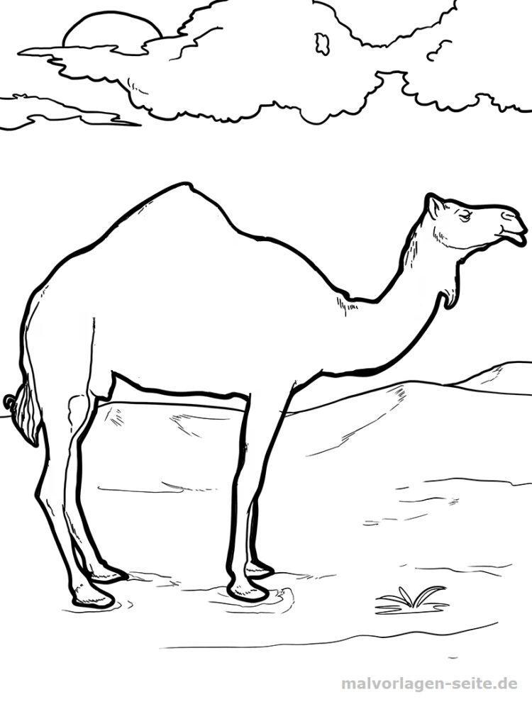 malvorlage kamel  tiere  kostenlose ausmalbilder