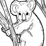Malvorlage Koala | Tiere