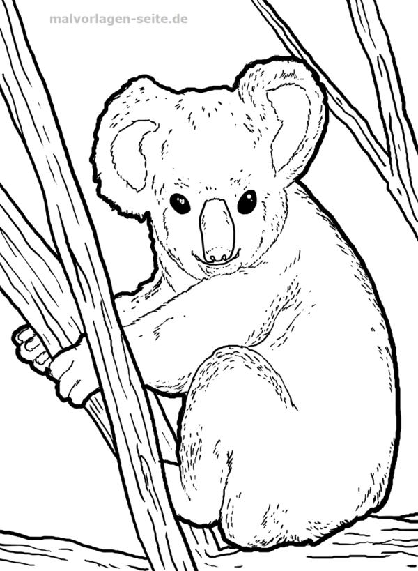 Malvorlage Koala Gratis Malvorlagen Zum Download