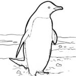 Pagine di culore pinguinu | Animali