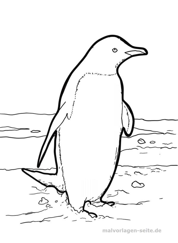 Dibujo para colorear pingüino | Páginas para colorear gratis para ...