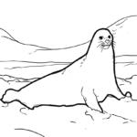 Գունազարդման էջը ծովի առյուծ | կենդանիներ