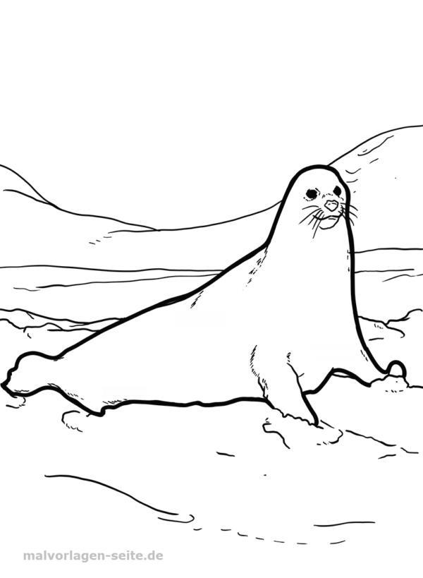 Dibujo para colorear león marino | Páginas para colorear gratis para ...