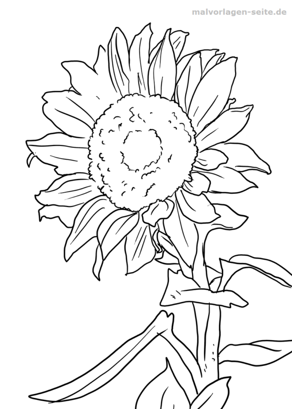 Malvorlage / Ausmalbild Sonnenblume