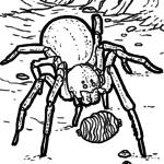 Väritys sivu hämähäkki / tarantula | eläimet
