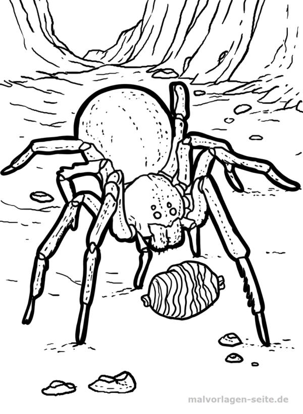 Värityskohta hämähäkki / tarantula