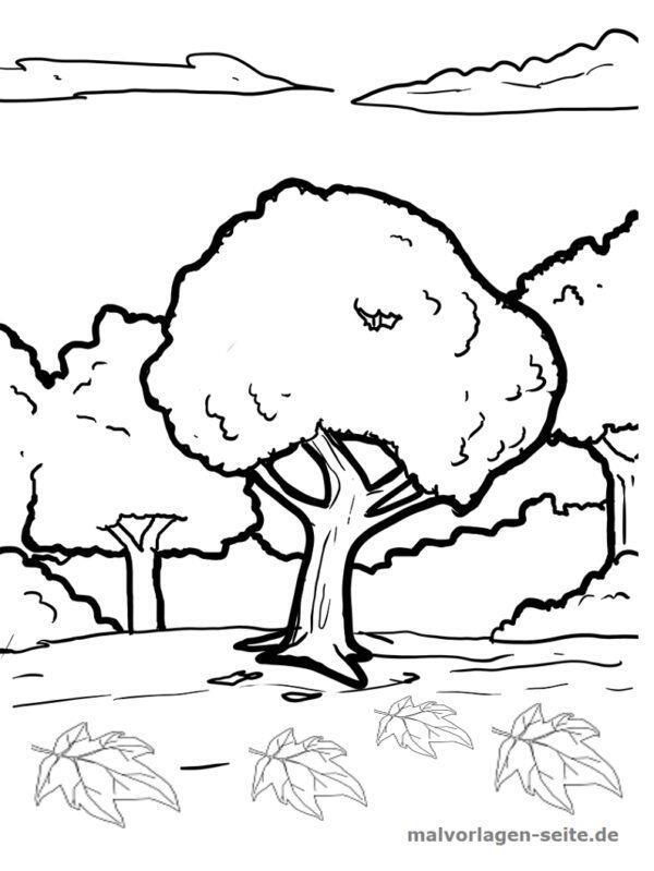 Malvorlage / Ausmalbild Ahornbaum