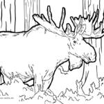 Malvorlage Elch | Tiere