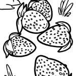 საღებარი გვერდის მარწყვი | ხილი