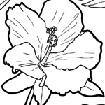 Coloring page Hibiscus | plants