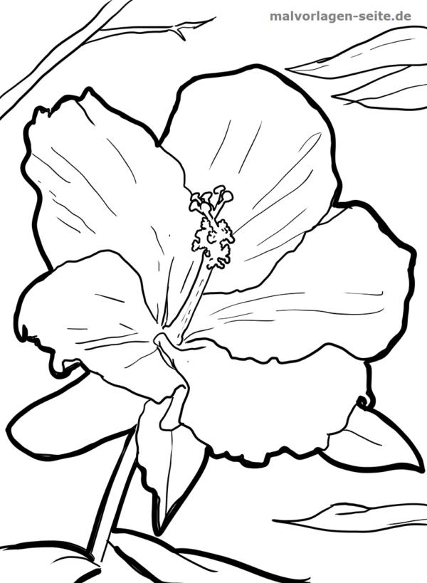 Malvorlage / Ausmalbild Hibiscus