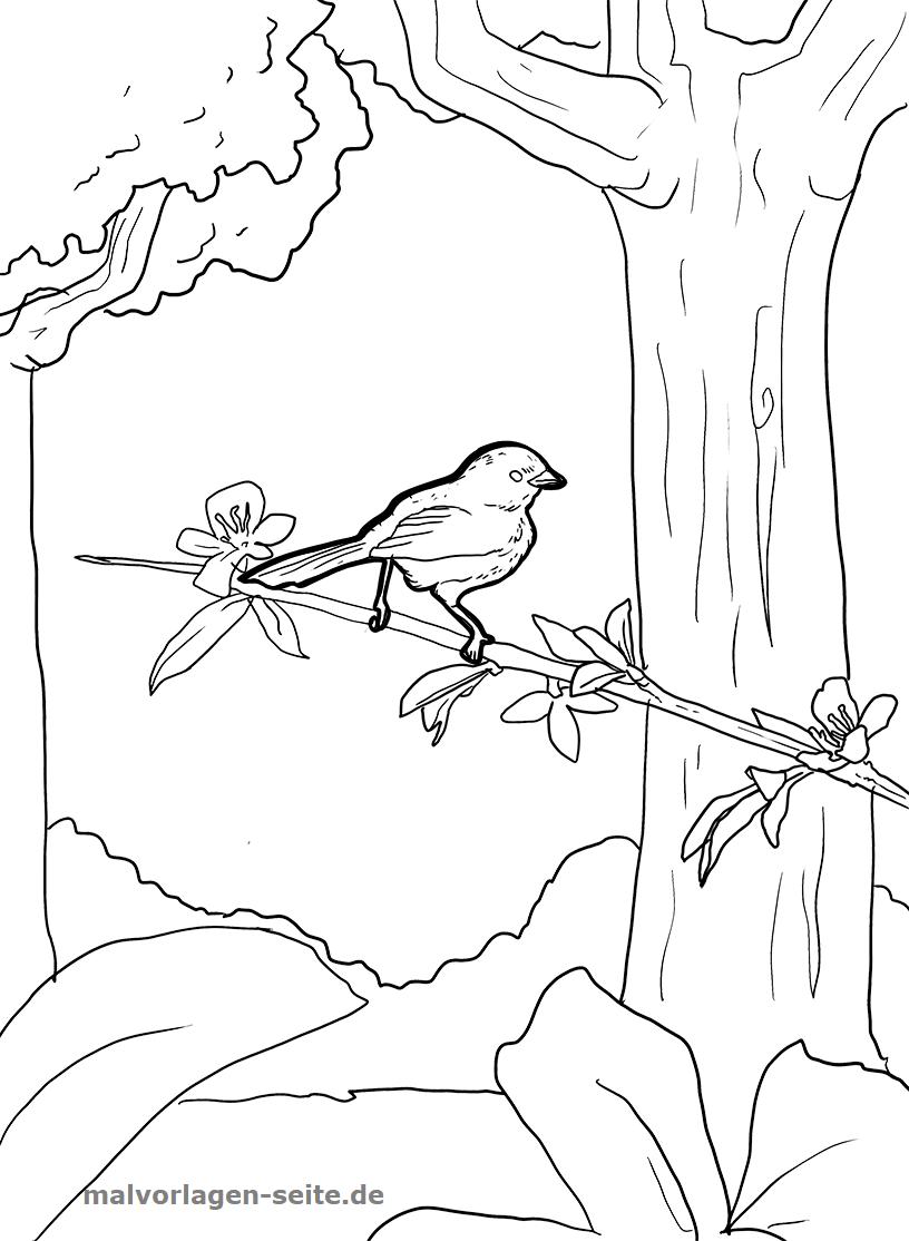 Malvorlage Vogel im Baum - Kostenlose Ausmalbilder