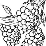 Libro sa pagkolor sa ubas