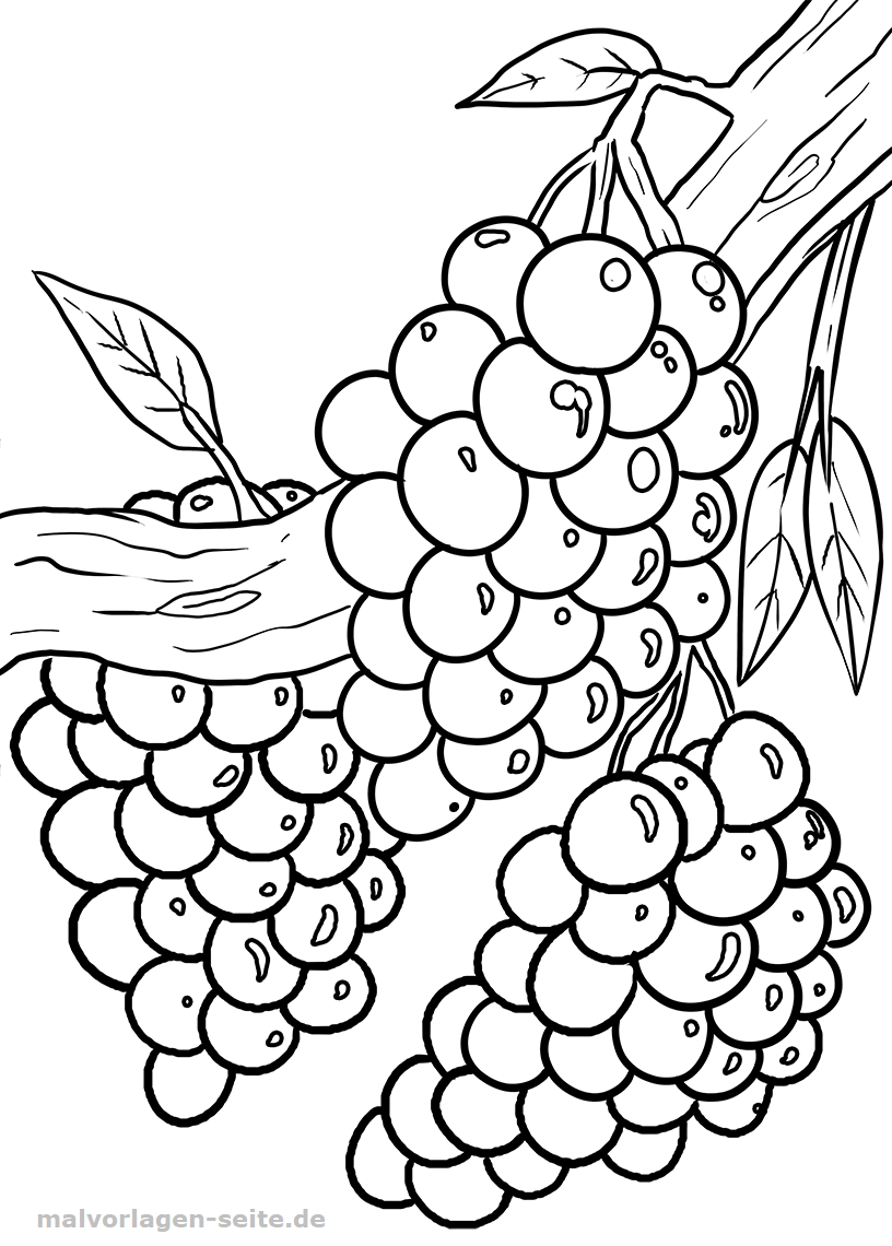 Malvorlage Weintrauben | Gratis Malvorlagen zum Download