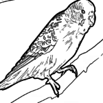 Coloring page budgerigar
