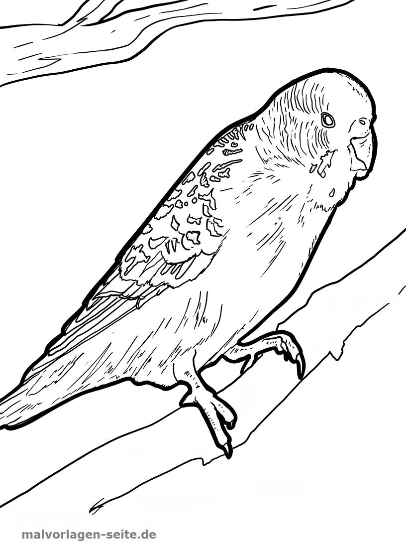 malvorlage wellensittich  vögel  kostenlose ausmalbilder