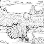 Malvorlage Adler | Tiere