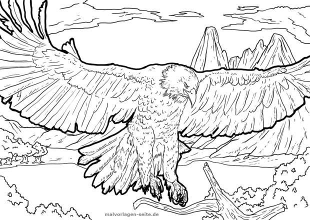 Malvorlage / Ausmalbild Adler