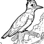 Malvorlage Eisvogel | Tiere