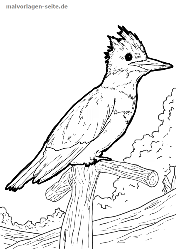 Malvorlage / Ausmalbild Eisvogel