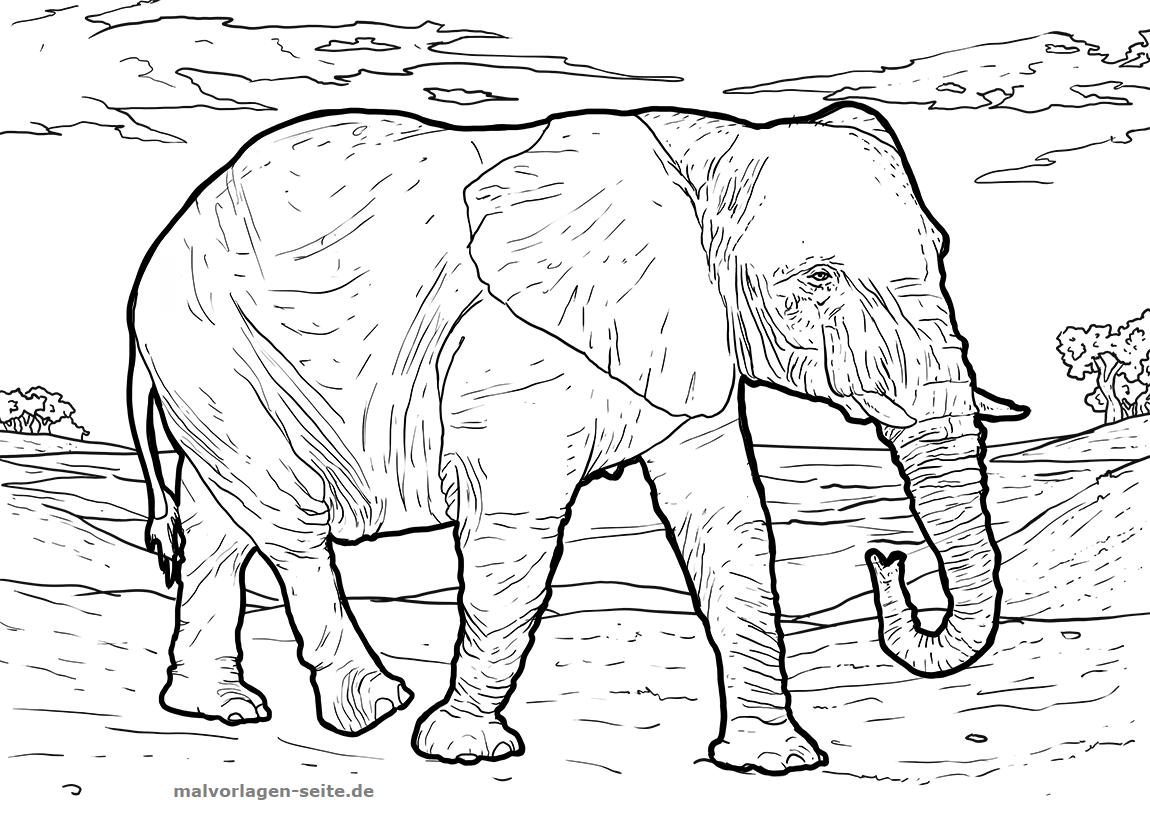 Malvorlage Elefant | Gratis Malvorlagen zum Download