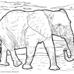 Elephants coloring pages Wild animals