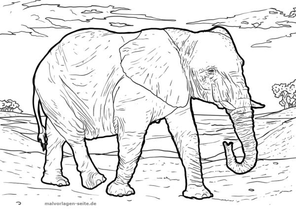 Malvorlage Elefant Tiere Ausmalbilder Kostenlos