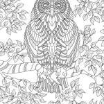 Coloring page owl on branch | animals