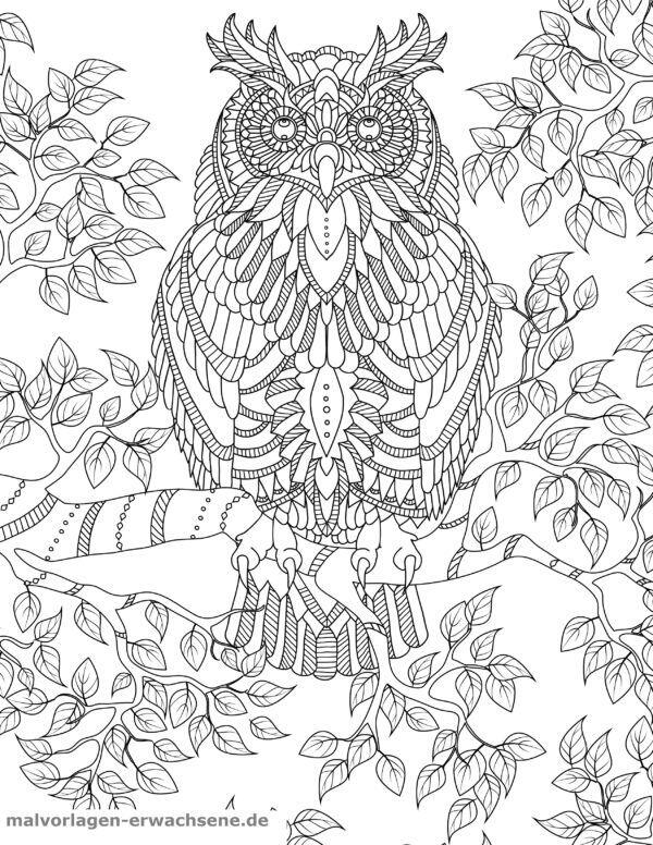 Coloring page Owl for Adults | Gratis Malvorlagen zum Download