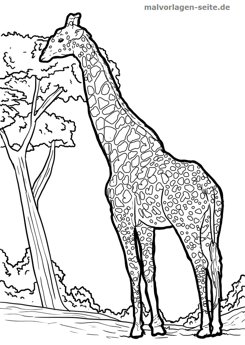 Malvorlage Giraffe | Gratis Malvorlagen zum Download