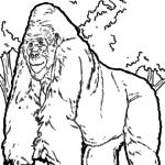 Ausmalbilder Affen
