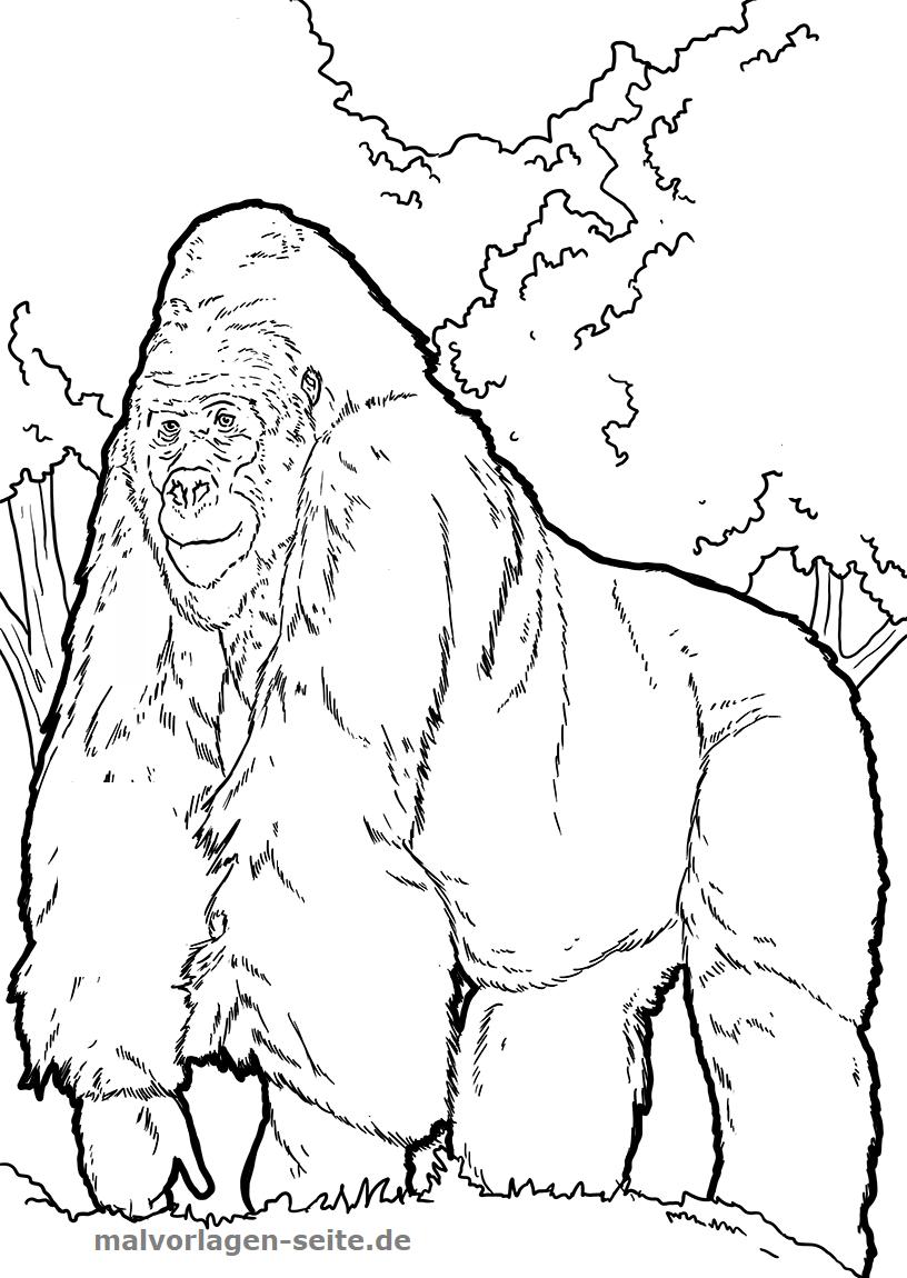 malvorlage gorilla affen ausmalbilder kostenlos