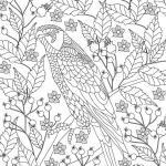 Coloring page bird of prey | animals