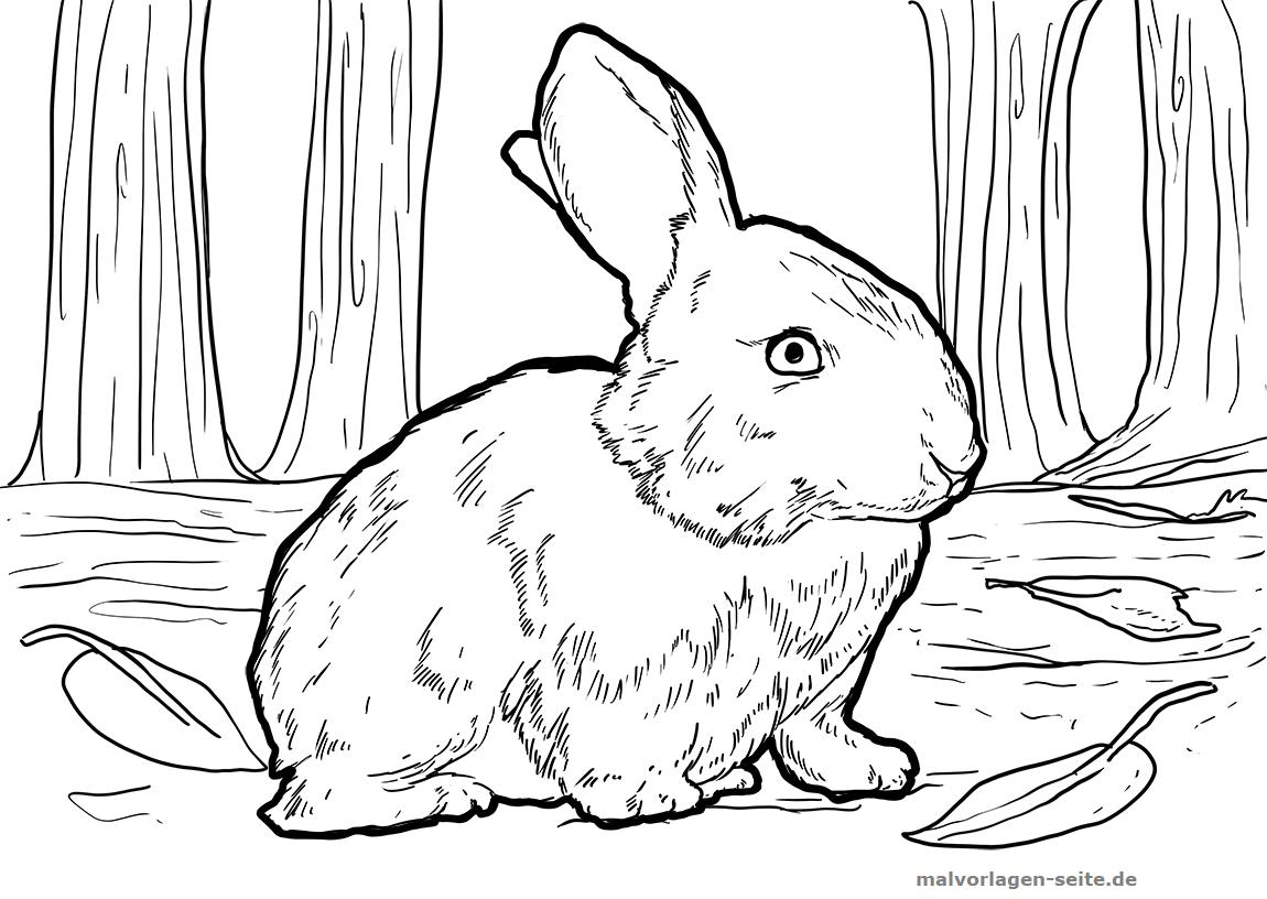 Malvorlage Kaninchen | Gratis Malvorlagen zum Download
