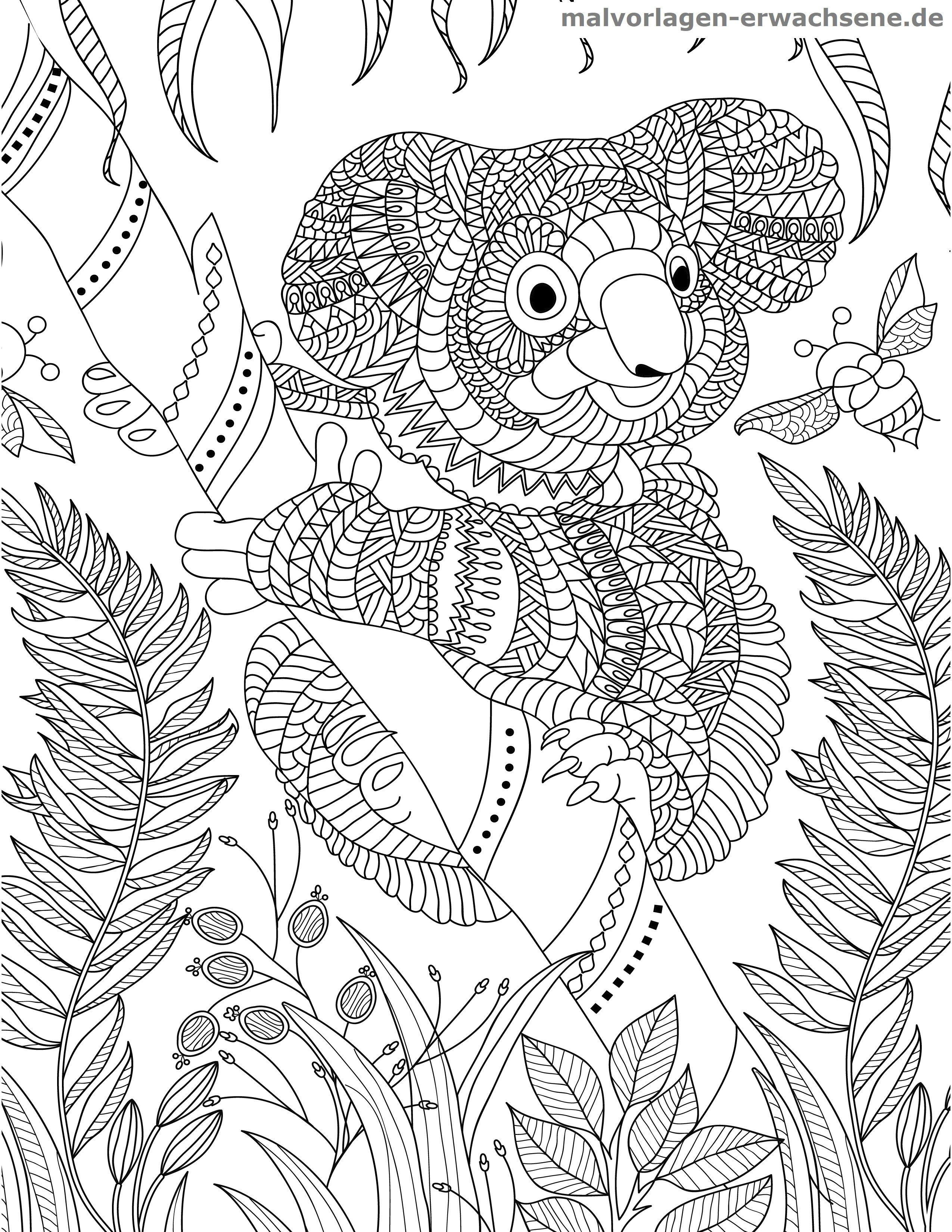 Malvorlage Koala für Erwachsene | Gratis Malvorlagen zum Download