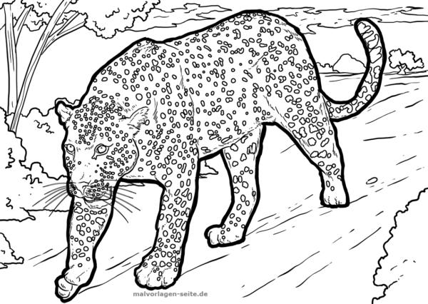 Malvorlage / Ausmalbild Leopard