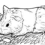 Kurzgeschichte für Kinder - Ein Haustier als Überraschung