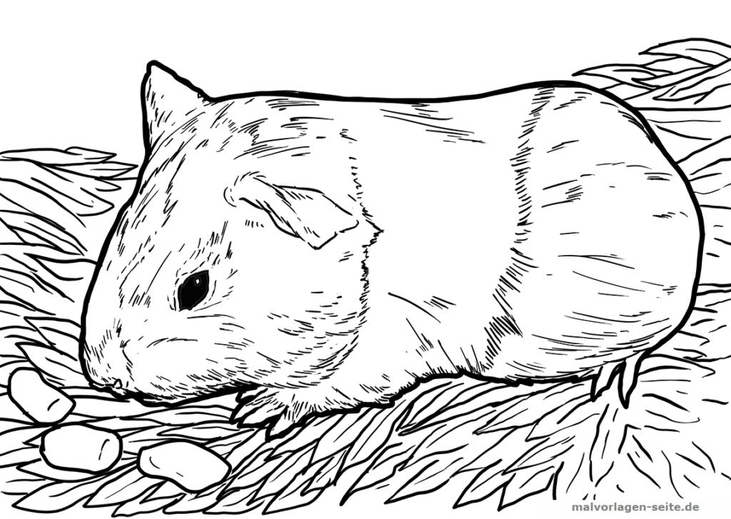 malvorlage meerschweinchen  tiere  kostenlose ausmalbilder