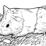 Coloring page guinea pig | animals